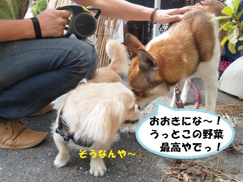 028_convert_20130929192819.jpg