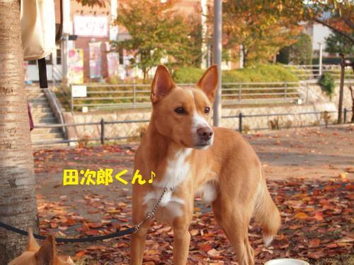 029_convert_20131117213335.jpg