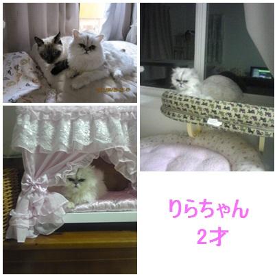 blog2_201311251610209f2.jpg