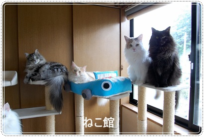blog4_20131122103351398.jpg