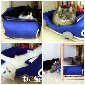blog9_20130918150502b15.jpg