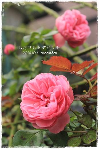 IMG_313511.jpg