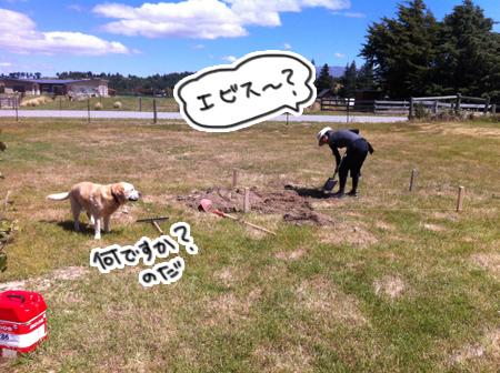 羊の国のラブラドール絵日記シニア!!「詰め込み過ぎ」4