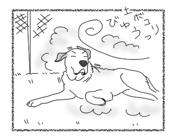 羊の国のラブラドール絵日記シニア!!「風上におく」1