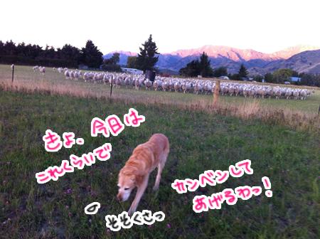 羊の国のラブラドール絵日記シニア!!「The 嗅覚」3