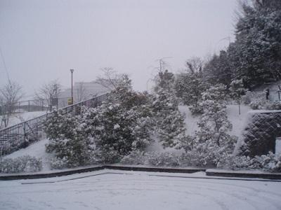 yukigahuru.jpg