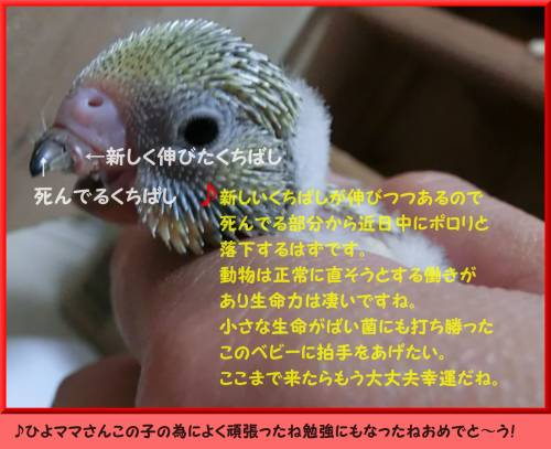 20130716215540e87.jpg