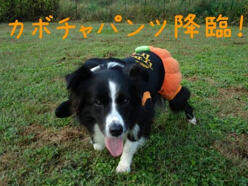 fc2_2013-10-18_20-37-55-735.jpg