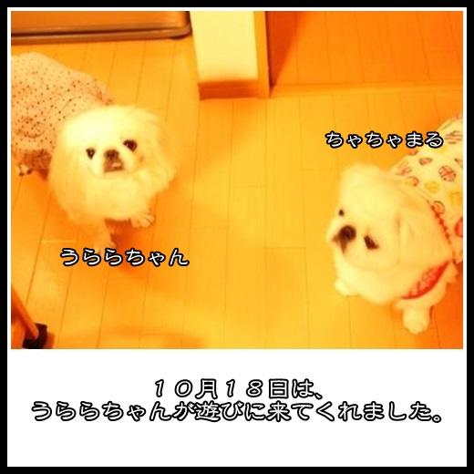 1_20131111164231afe.jpg