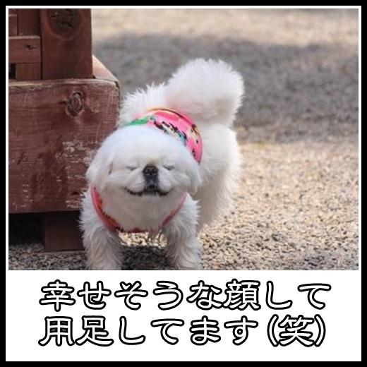 2_20130502091434.jpg