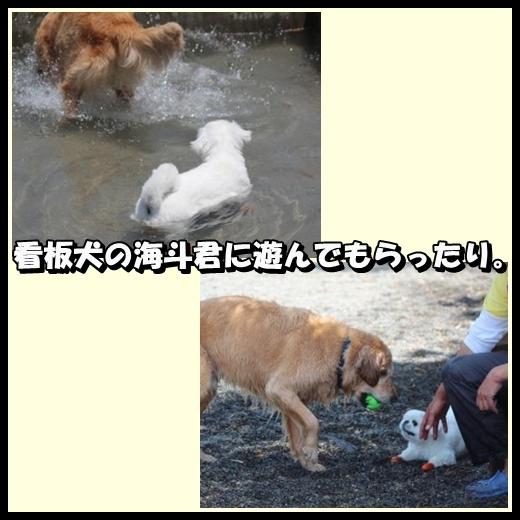 3_20130523144024.jpg