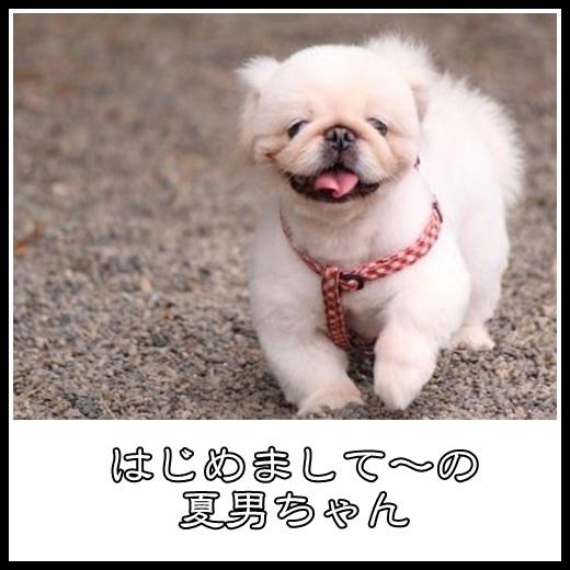 3_20131115174257af9.jpg
