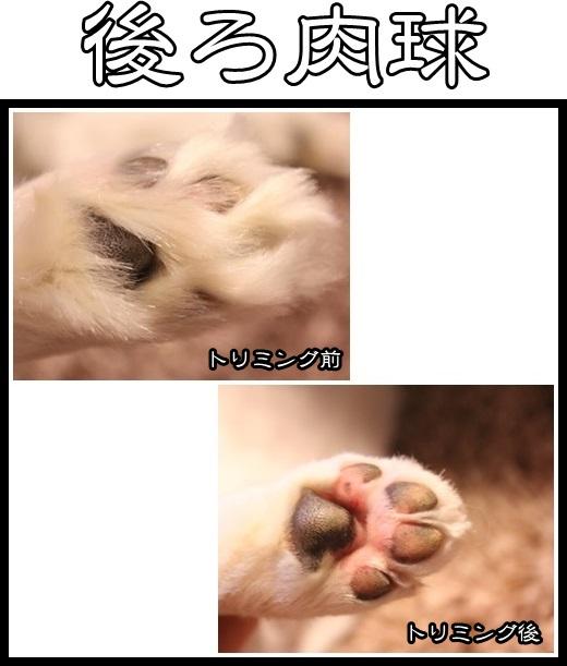 4_20130514162025.jpg