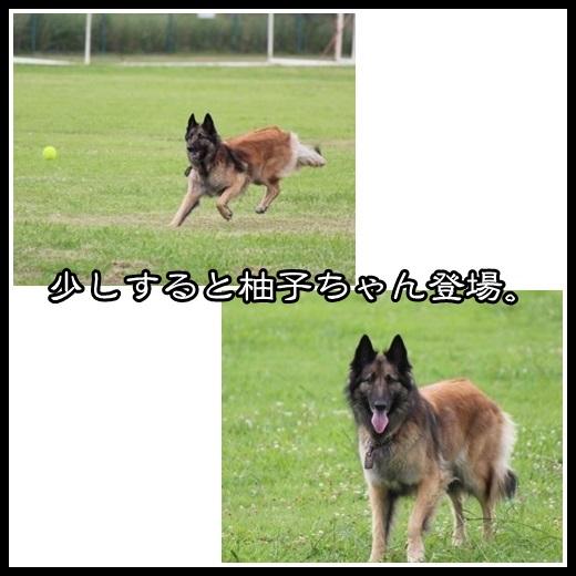 4_201308091555453fb.jpg