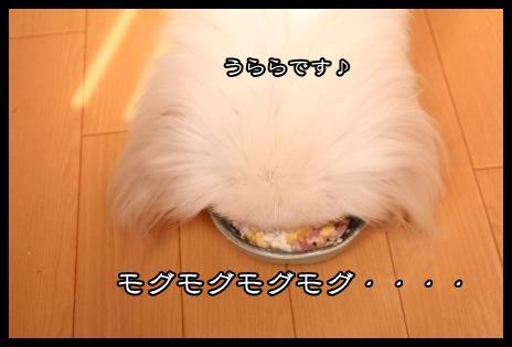 4_20131111164236ab6.jpg