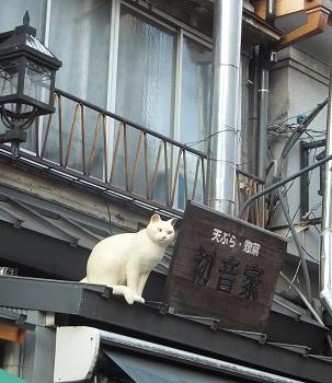 谷中銀座猫1
