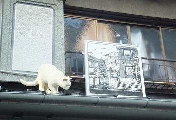 谷中銀座猫4