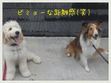 edit_2013-06-14_21-33-22-906.jpg