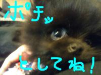 snap_machiz4_2014120211044.jpg