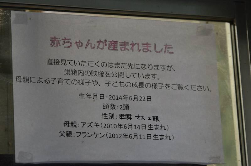 031_5138.jpg