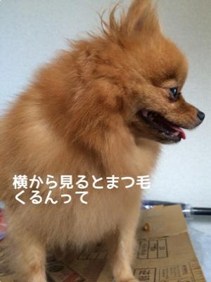 fc2blog_20140918193403dc4.jpg