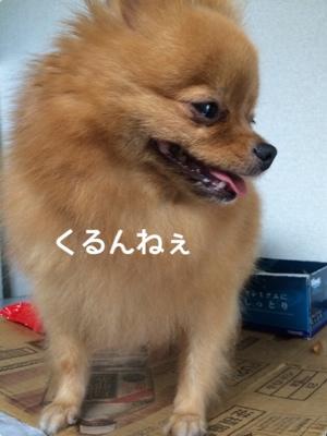fc2blog_20140918193449fe5.jpg