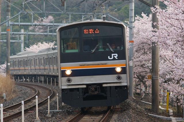 130401-JR-W-hanwa-205-sakura-1.jpg