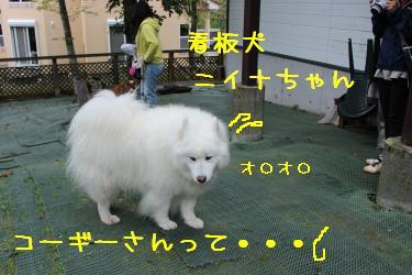 20131101160717b6d.jpg