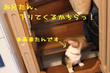 2013111413225664f.jpg