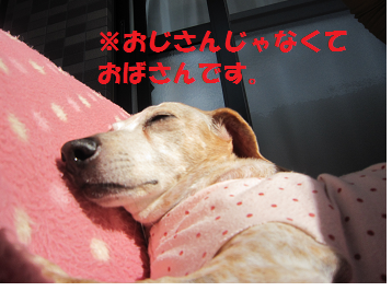14109p3.png