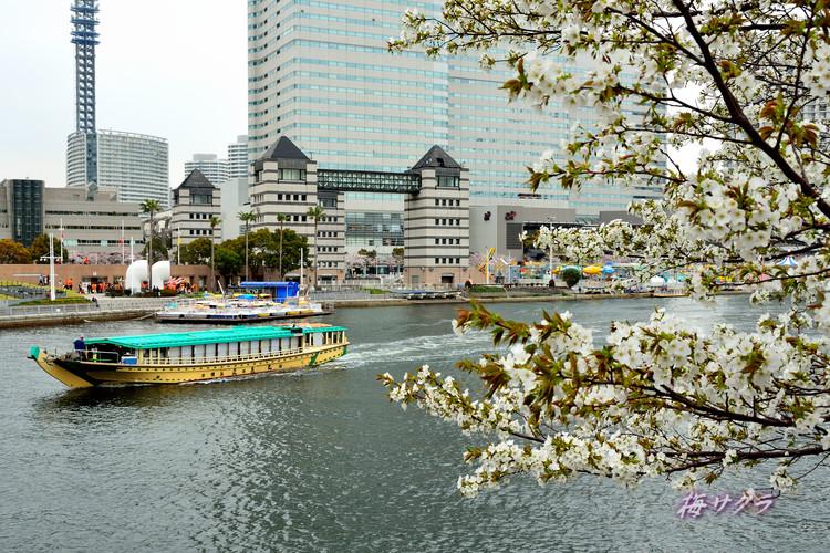 横浜散策2(2)変更済