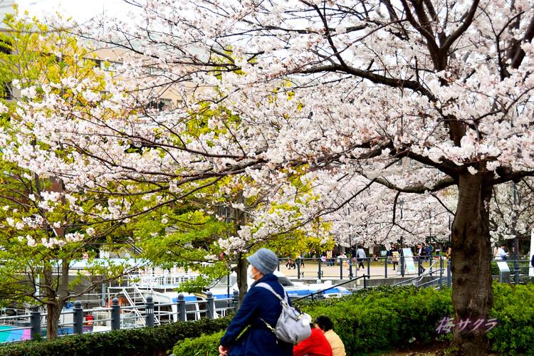 横浜散策2(5)変更済