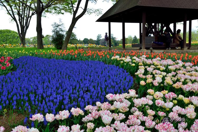 昭和記念公園1(9)変更済