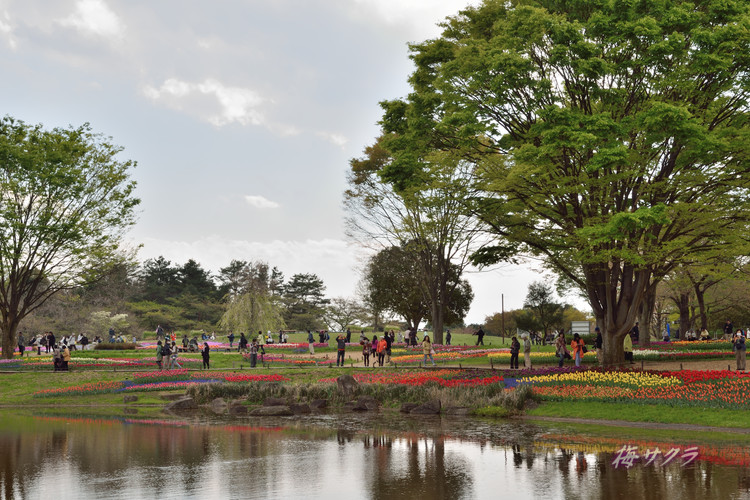 昭和記念公園4(1)変更済