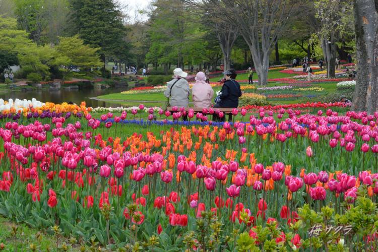 昭和記念公園4(9)変更済