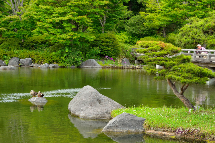 昭和記念公園撮影実習2(4-1)変更済