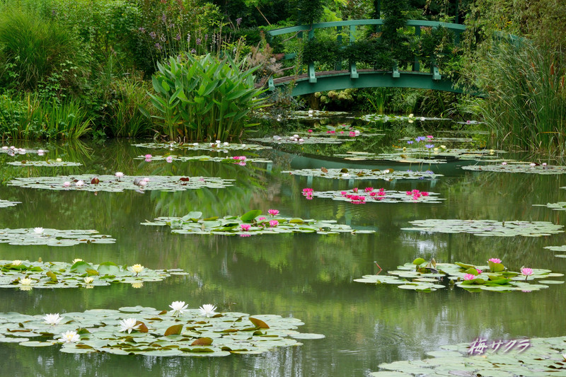 花の美術館2(水の庭1)変更済