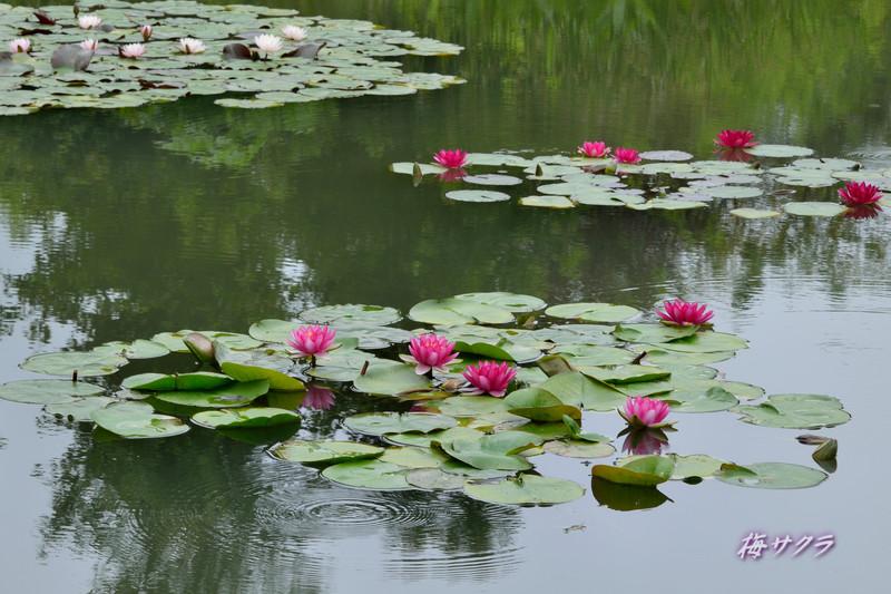 花の美術館2(水の庭2)変更済