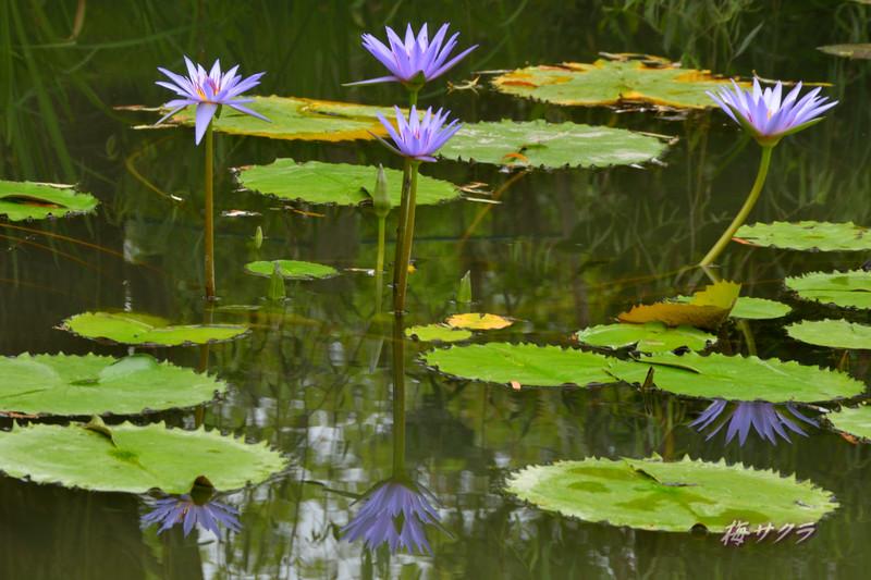 花の美術館2(水の庭3)変更済