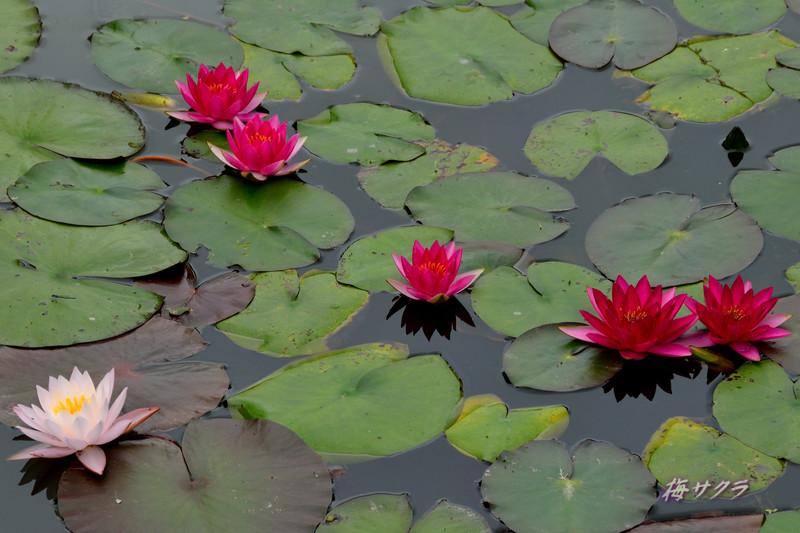 花の美術館2(水の庭6)変更済