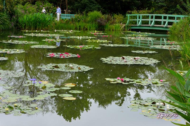 花の美術館2(水の庭8)変更済