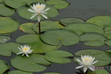 花の美術館2(水の庭5-1)変更済
