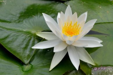 花の美術館2(水の庭5-2)変更済