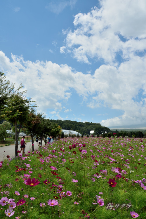 花の都公園1(7)変更済