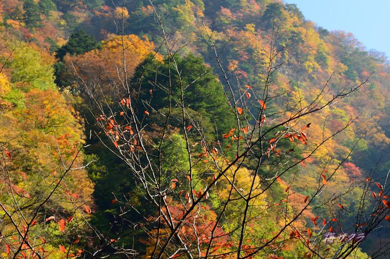 中津川渓谷1(3)変更済