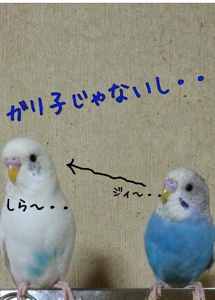fc2_2013-11-23_08-57-30-946.jpg