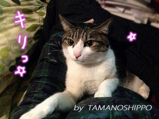 膝に座る猫20140206