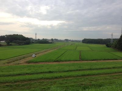 近所の農地