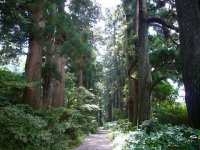箱根旧東海道杉並木