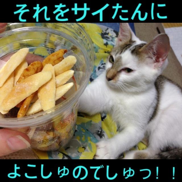 image_2013090713120838f.jpg